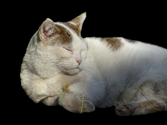 Katze in weiss